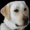 capecodcdog