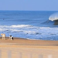 dog days of winter. United States, Empty Wave photo