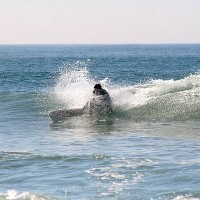 Hb State. SoCal, Surfing photo