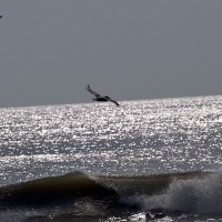 obx 2012 pelican. Virginia Beach / OBX, Empty Wave photo