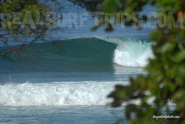Real Surf Trips.com The trees...the breeze....REAL