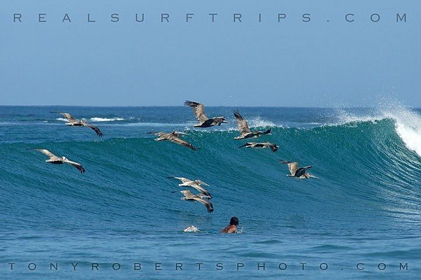 Real Surf Trips Costa Rica Just you and your new friends....REAL