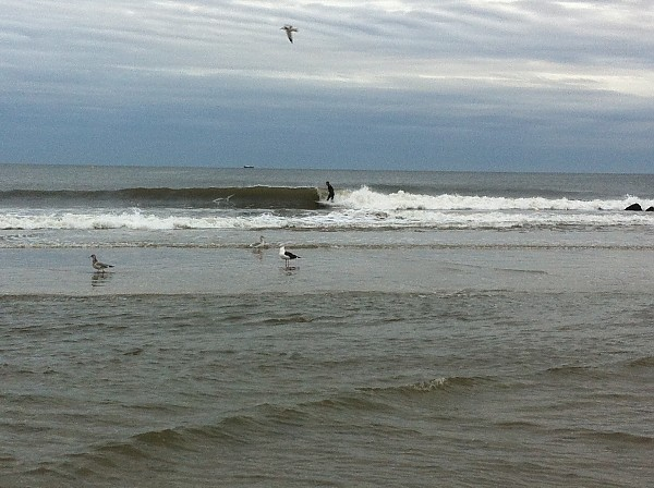 Poor surfing, nice nature pic nj surf