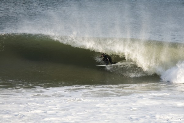Nj 1-26-10 Pig dog.. New Jersey, Surfing photo