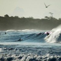 Surfing fun waves in the vibrant tropical dry forest?