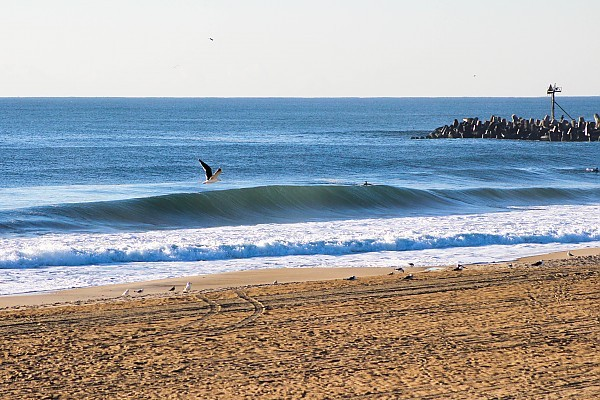 Birds and Barrels. United States, Empty Wave photo