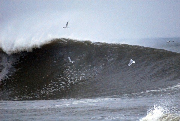 1/18/11 Ocm Seagull Surfing. Delmarva, Empty Wave photo