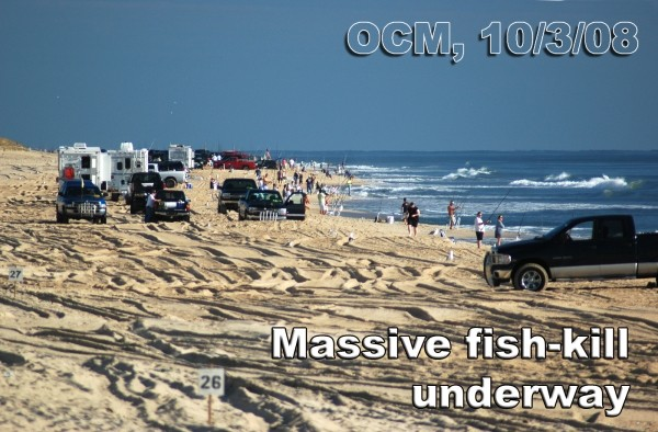 Massive Fish Kill Underway! No, it's not OBX or even