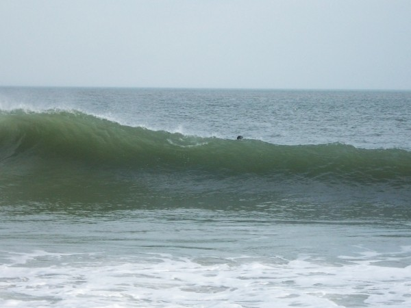 ss wedging, back in february. Delmarva, surfing photo