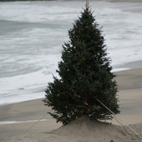 Christmas Tree On The Beach. New Jersey, Scenic photo