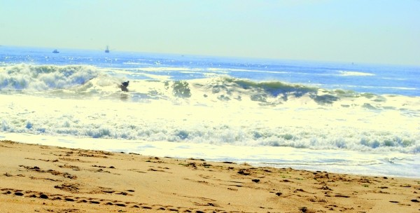 Point Pleasant, May 26, 2010!!! Very Good Waves!!!